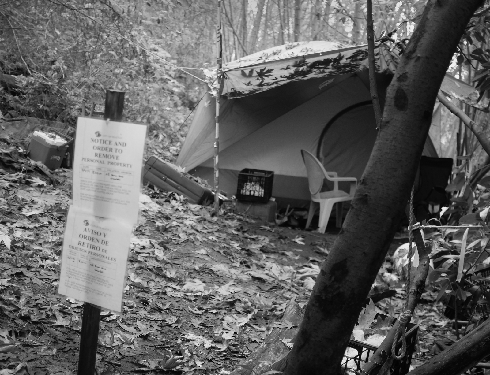 "A sign ""notice and order to remove"" in front of a tent with leaves and objects on the ground in a wooded area"