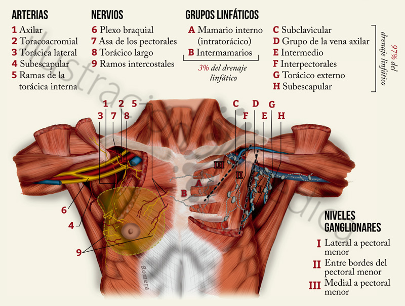 Porfolio de Ilustración Médica: Miniatlas de cáncer de mama ...