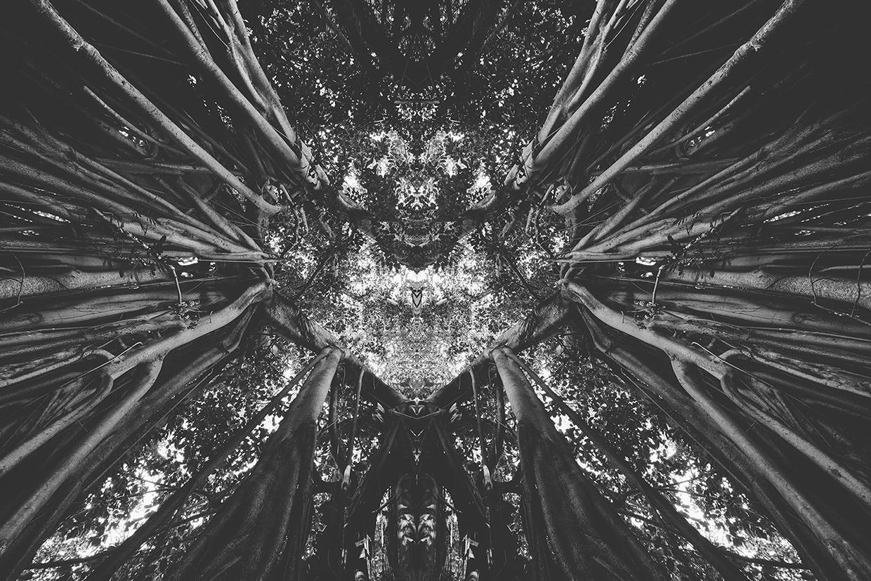 Rorschach photography