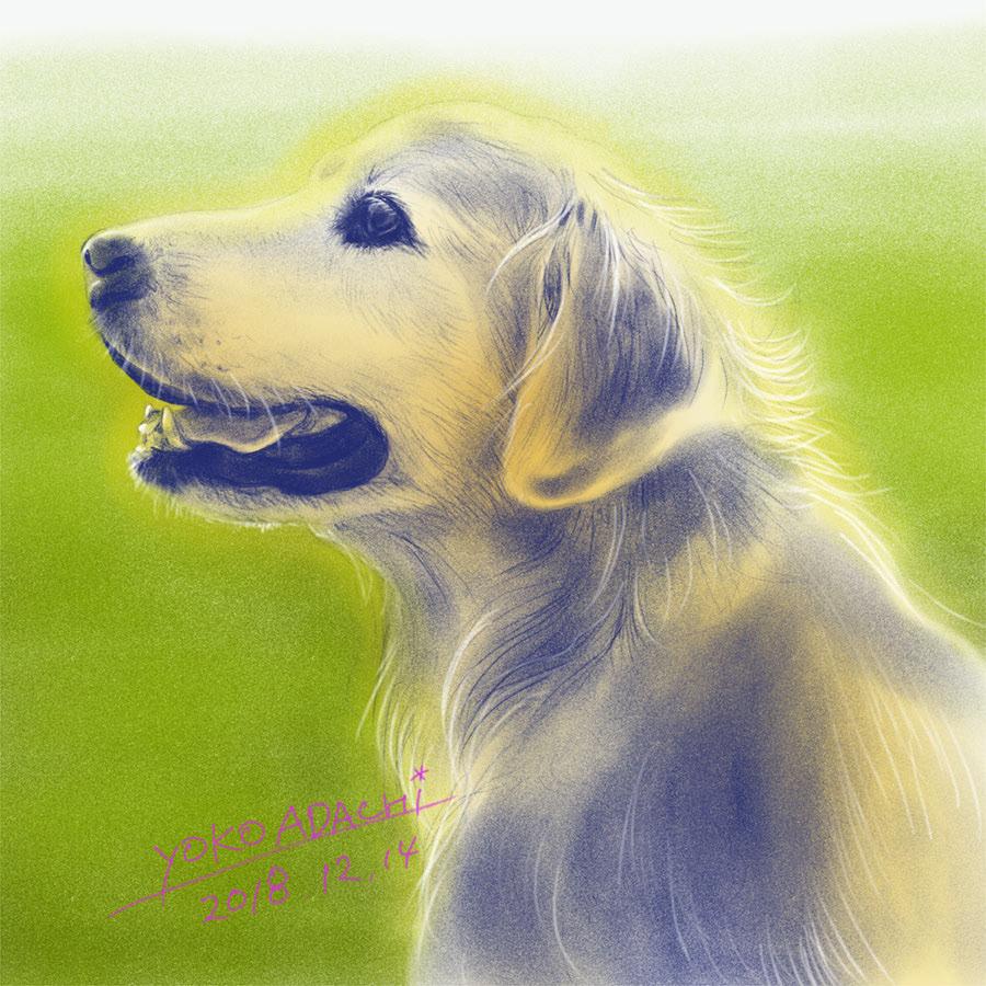 ILLUSTRATION  dogillustration GOLDENRETRIEVER Retriever dog doglover art イラスト ドッグイラスト Drawing