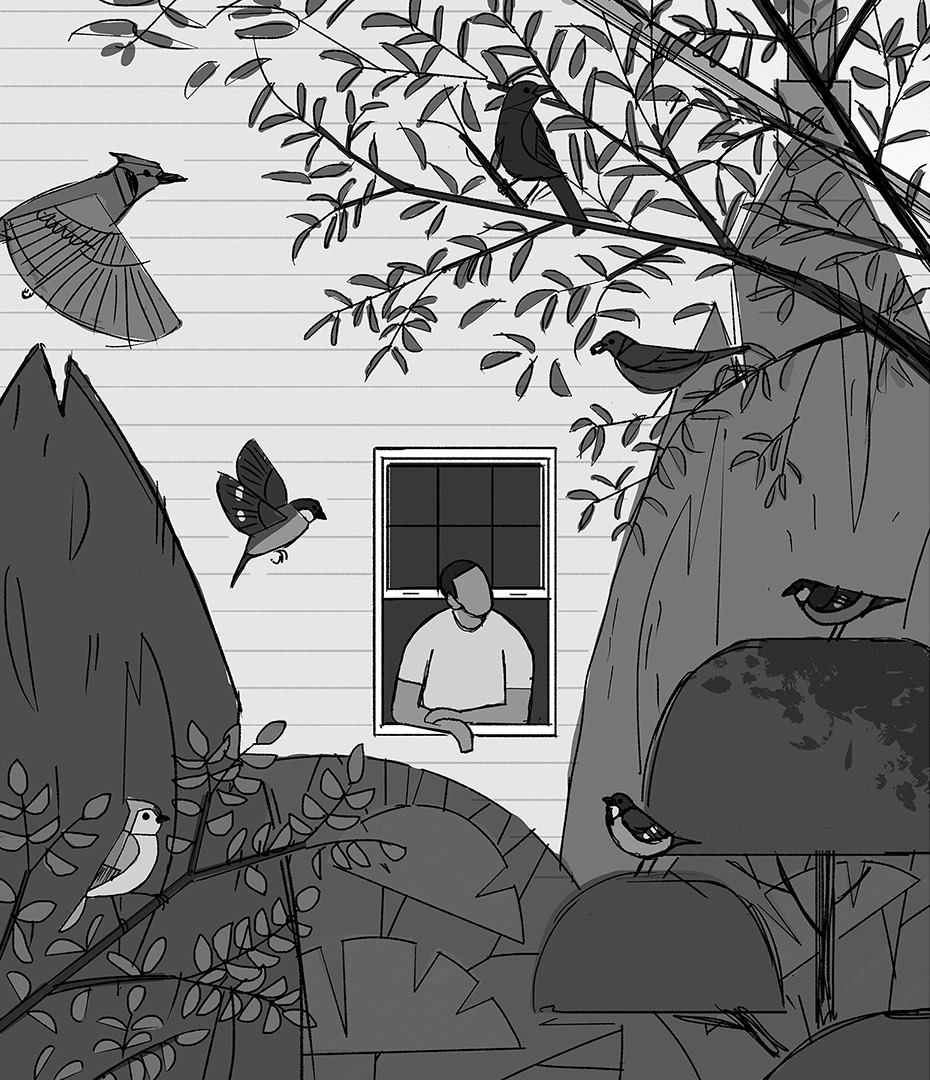 animal bird editorial Nature observation