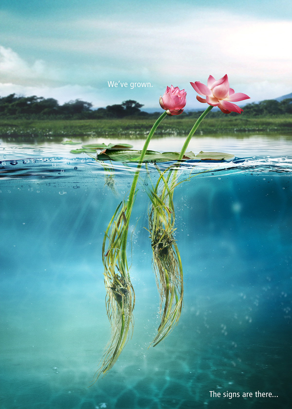Lotus water river fish koi manipulation digital malaysia sarawak