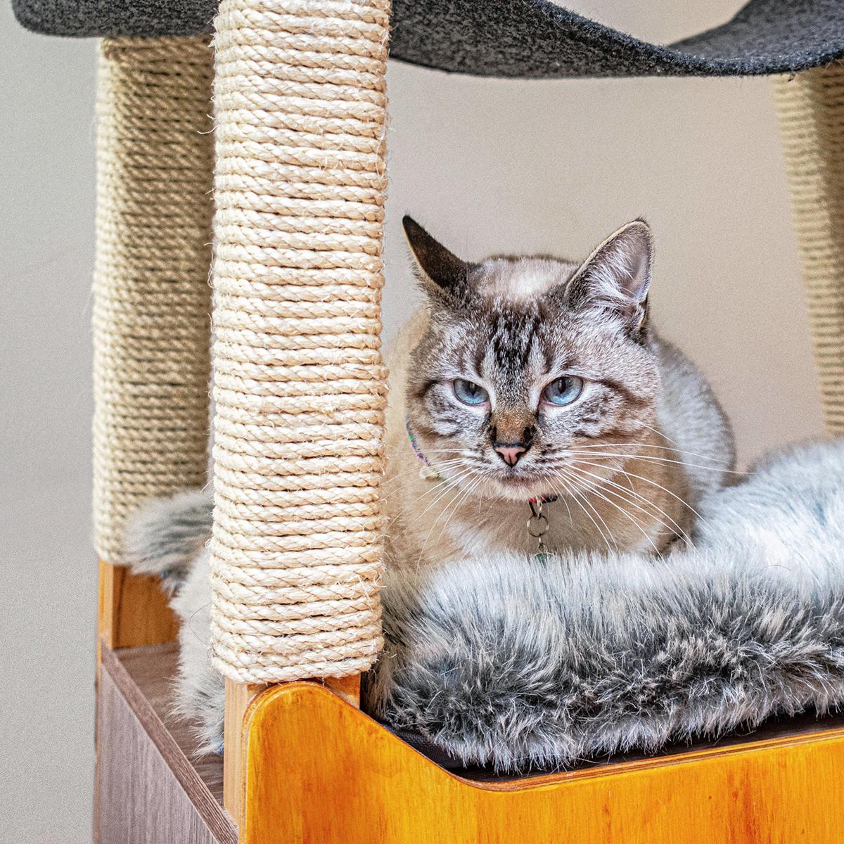 animals Cat Cat house Cat tree cats furniture industrial design  pet furniture pets product design
