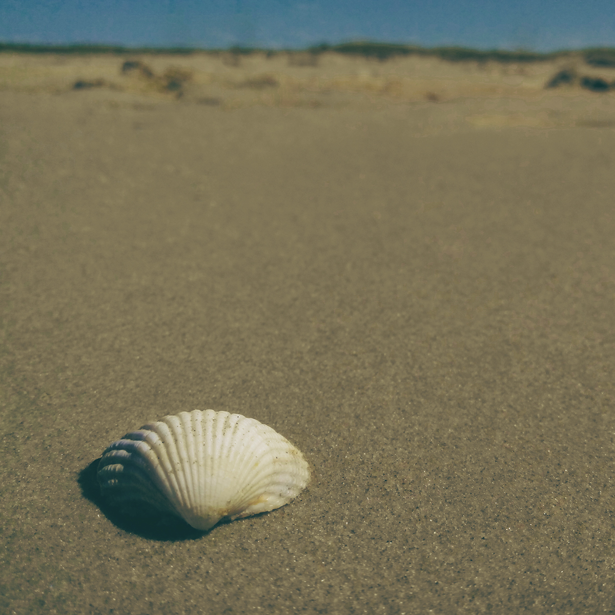 Picture sand shell