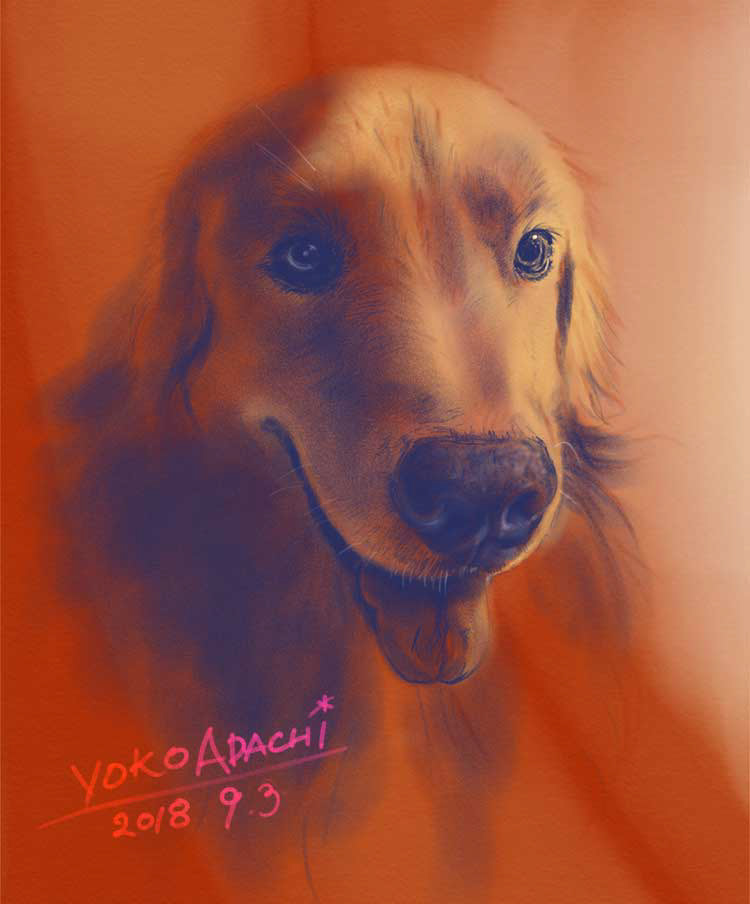 ILLUSTRATION  dogillustration GOLDENRETRIEVER Retriever dog doglover zephyr art イラスト ドッグイラスト