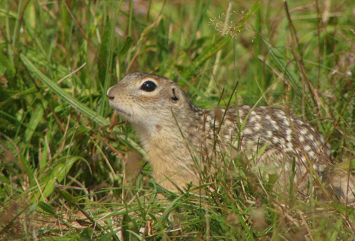 Image may contain: grass, mammal and animal