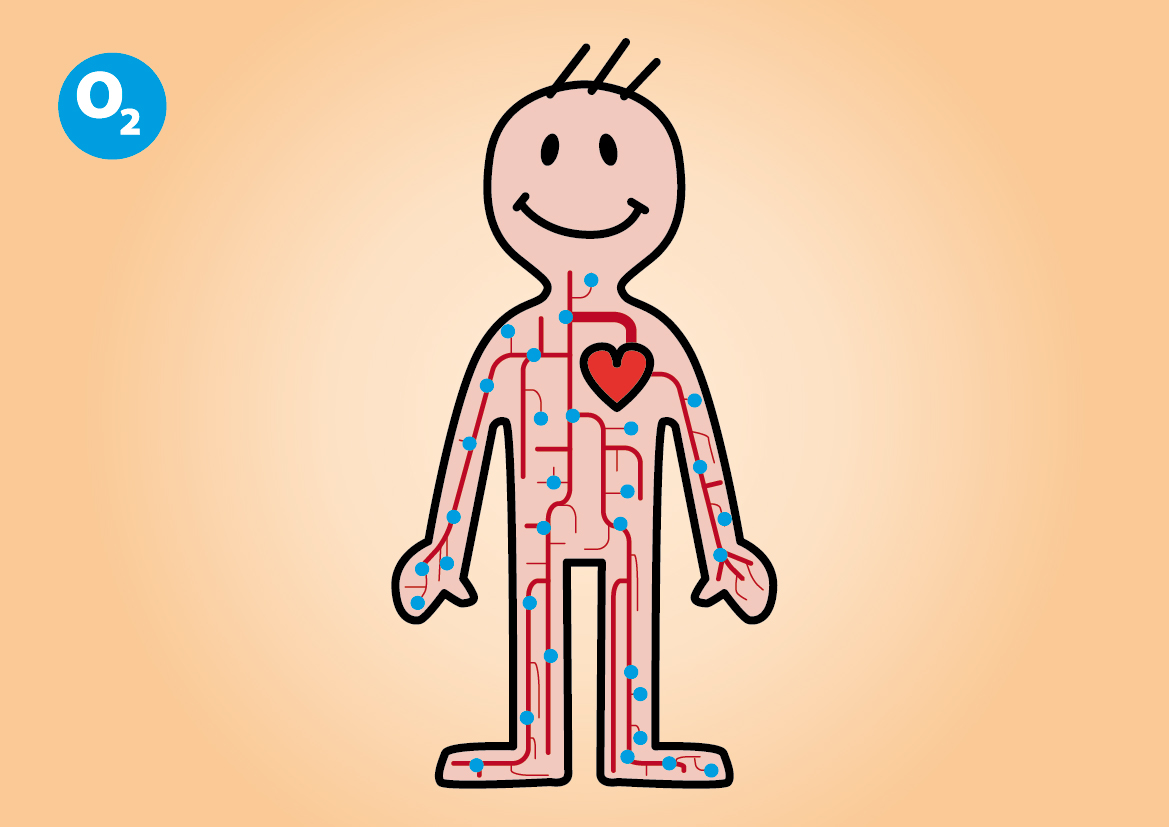 How The Heart Works For Kids Video Ibovnathandedecker