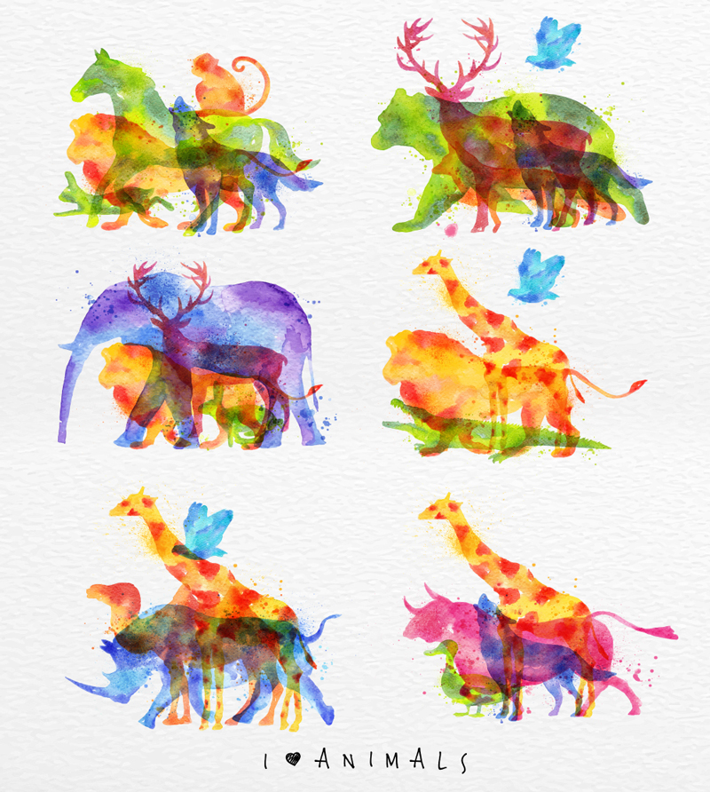 Chester Cheetah Illustrations On Behance: Watercolorn Animals On Behance