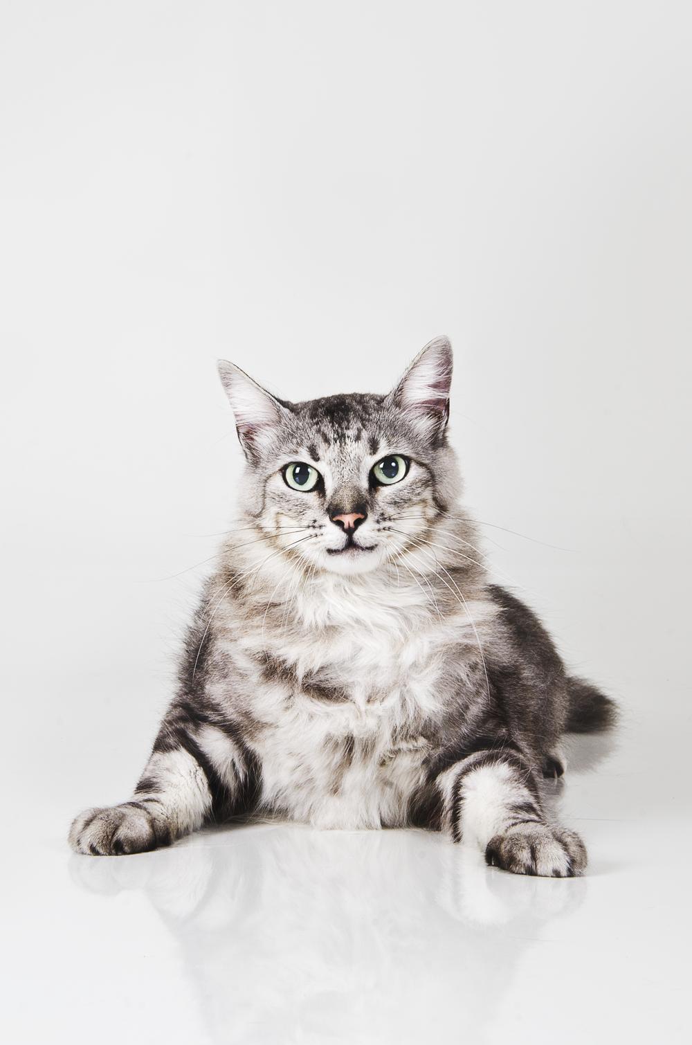 pet photography cats fotografia de estimação. gatos animais pet food