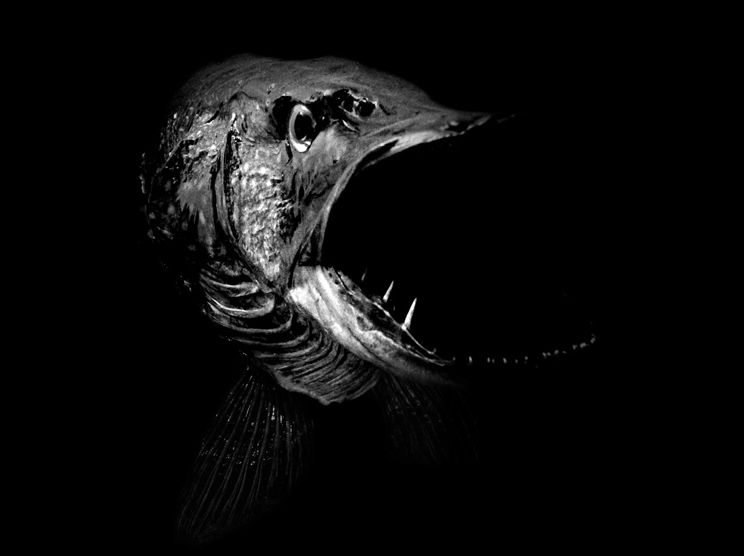 fish  lowkey maxomat lowkey