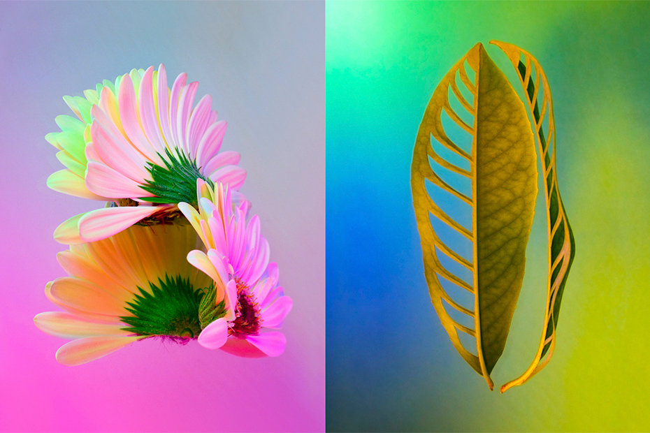 Herbarium still life colorful Flowers Nature pollution Photography  plante botanical art direction