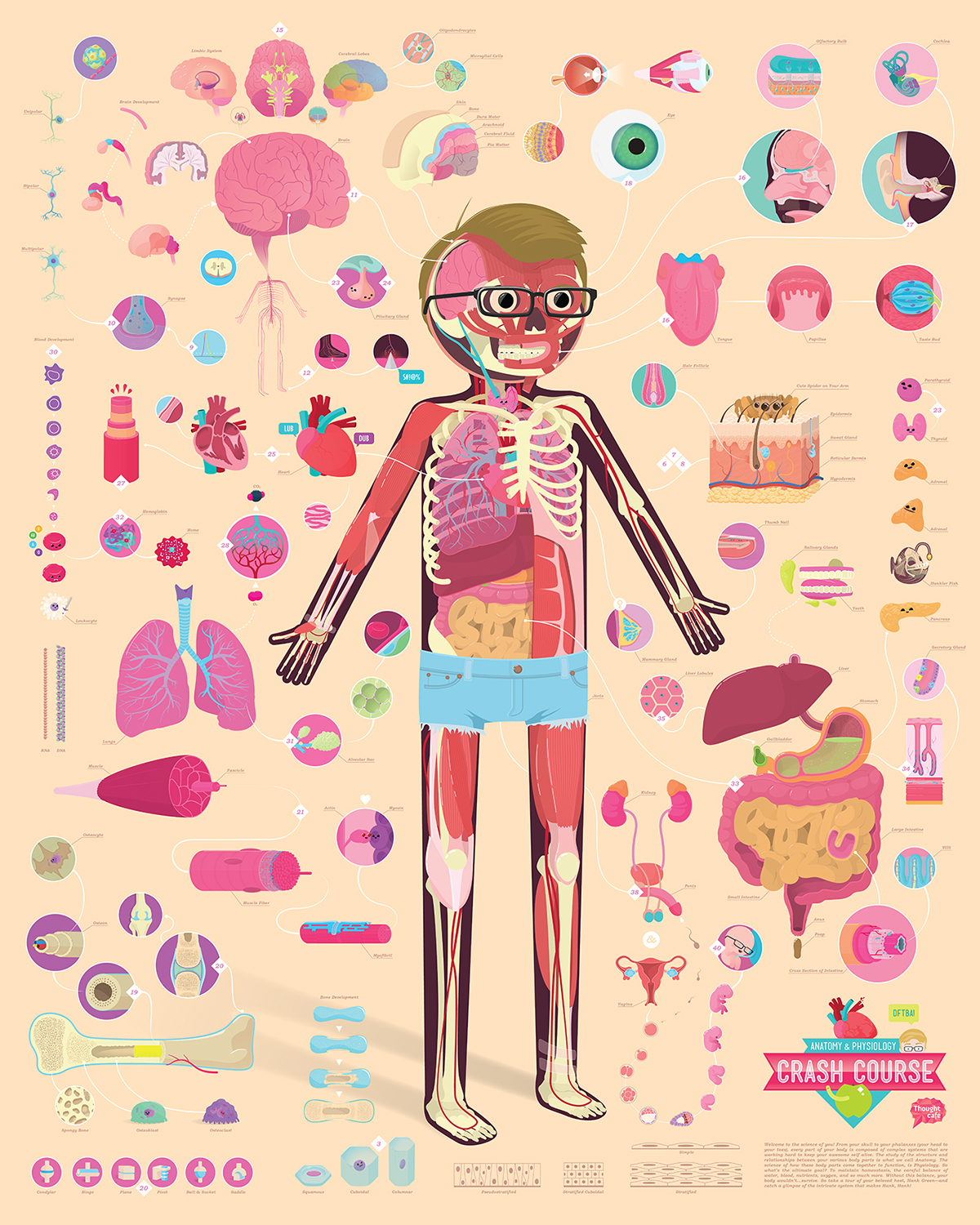 Crash Course Anatomy Poster On Behance