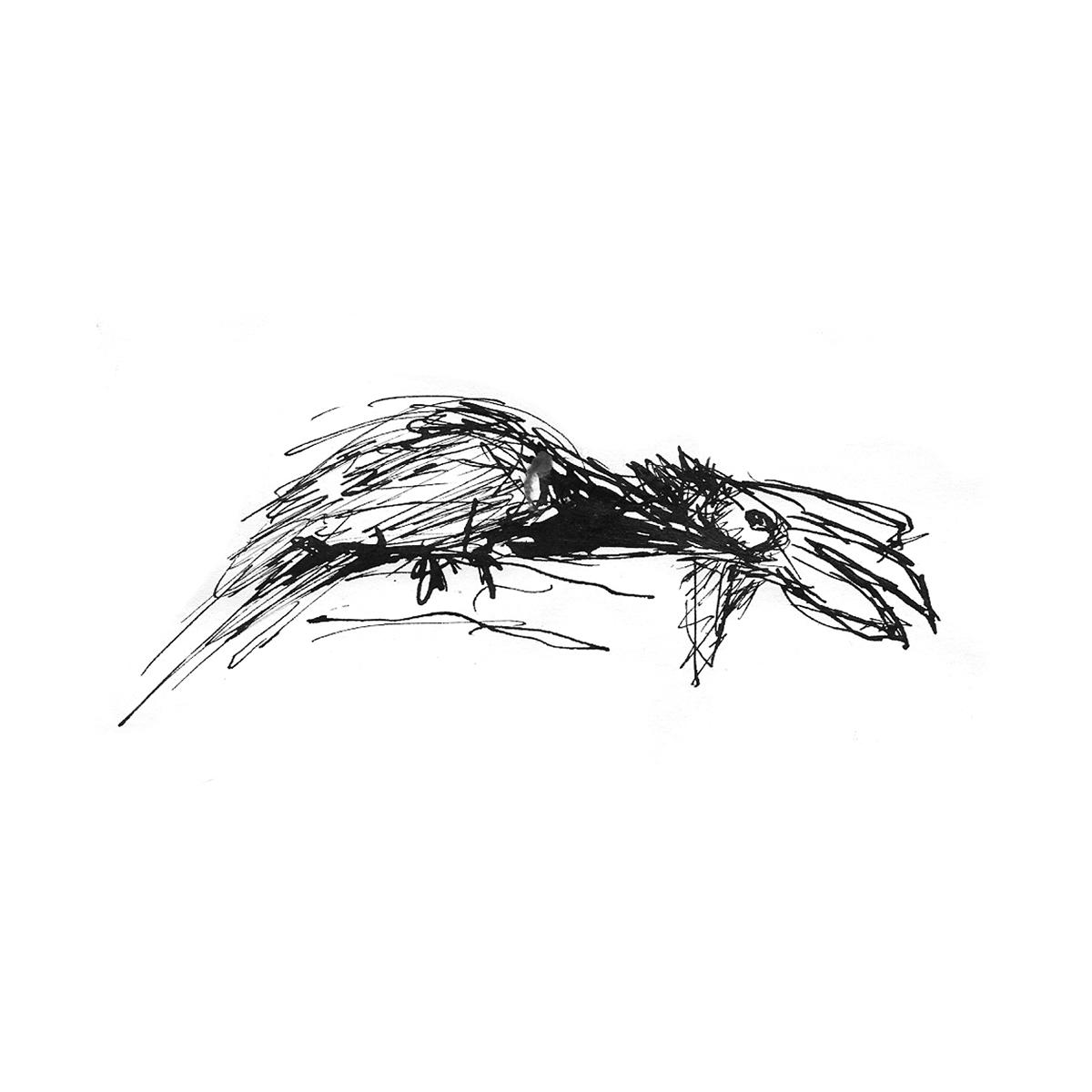 ink animals iIllustration skatchies fastdrawing zoo bird elephant vulture parrot blackandwhite