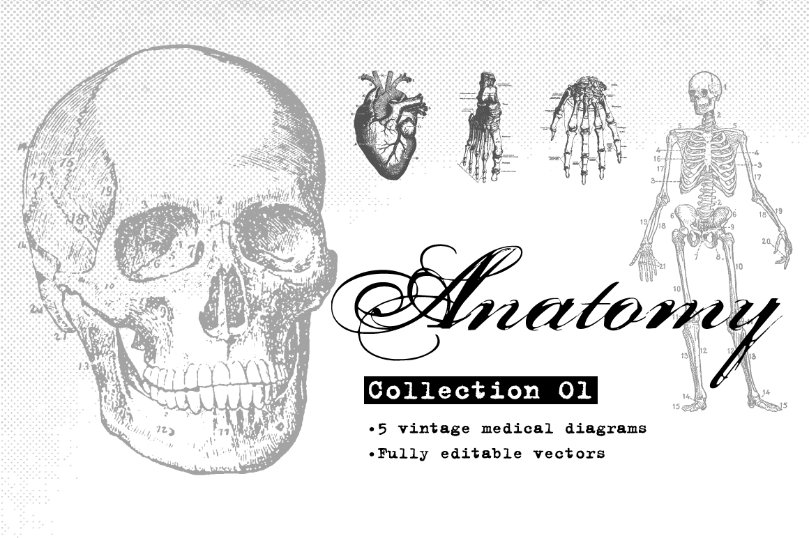 Anatomy Collection 01 On Behance
