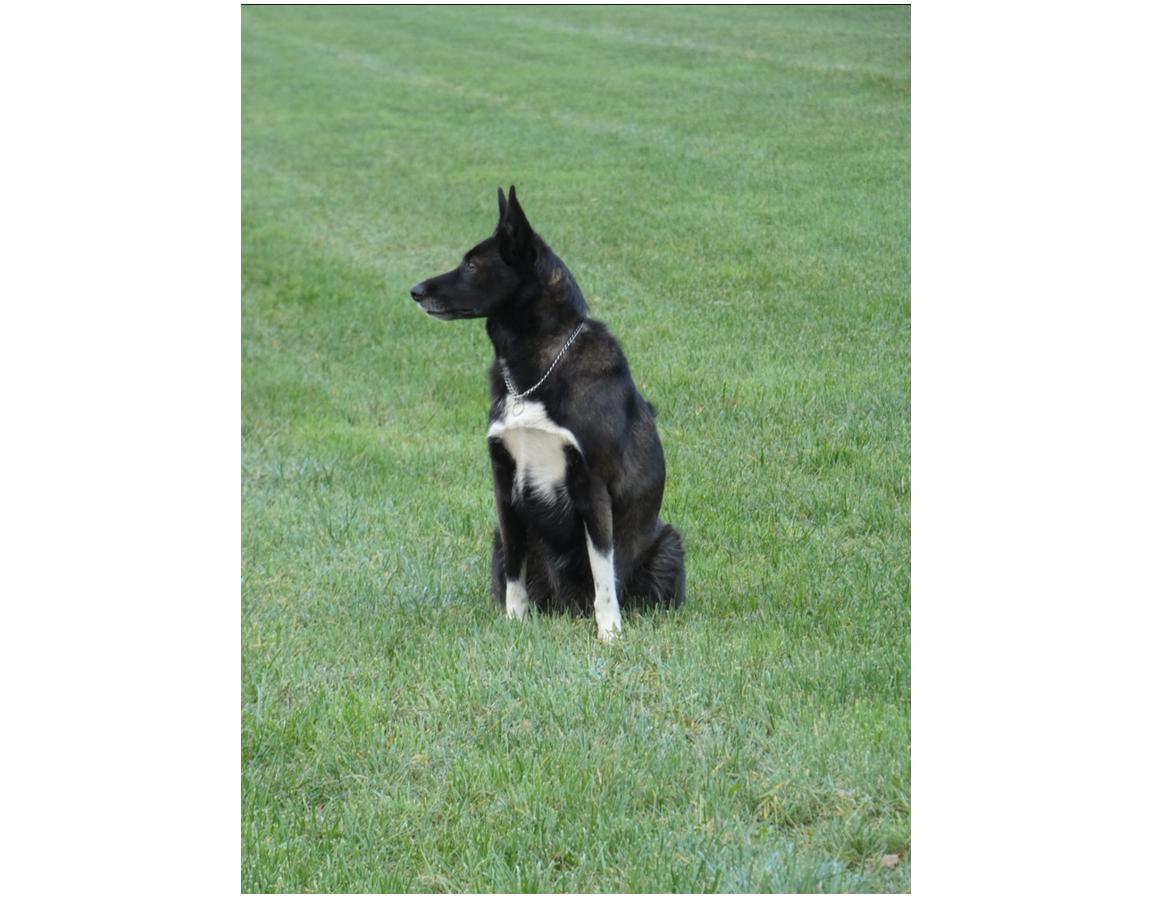 dog gras