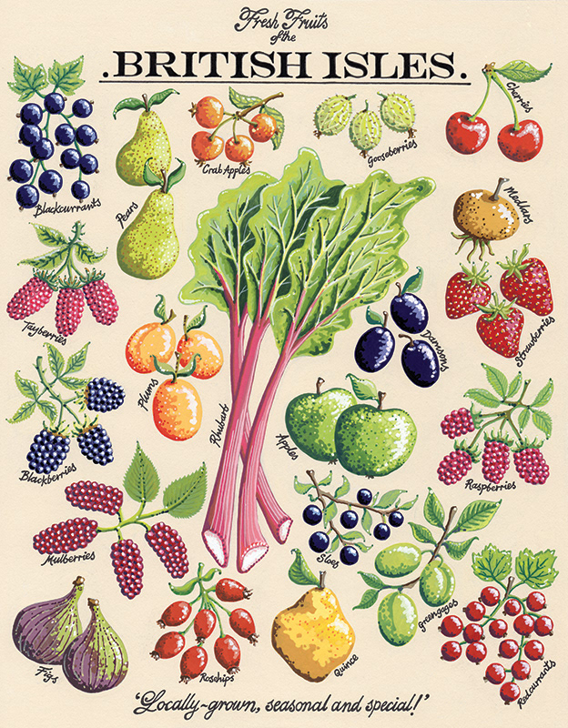 Image may contain: fruit, illustration and food