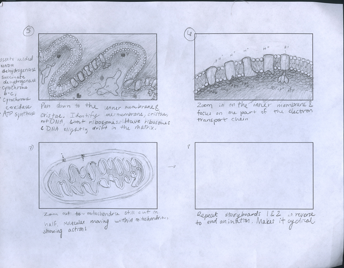 Mitochondria Structure And Components On Behance