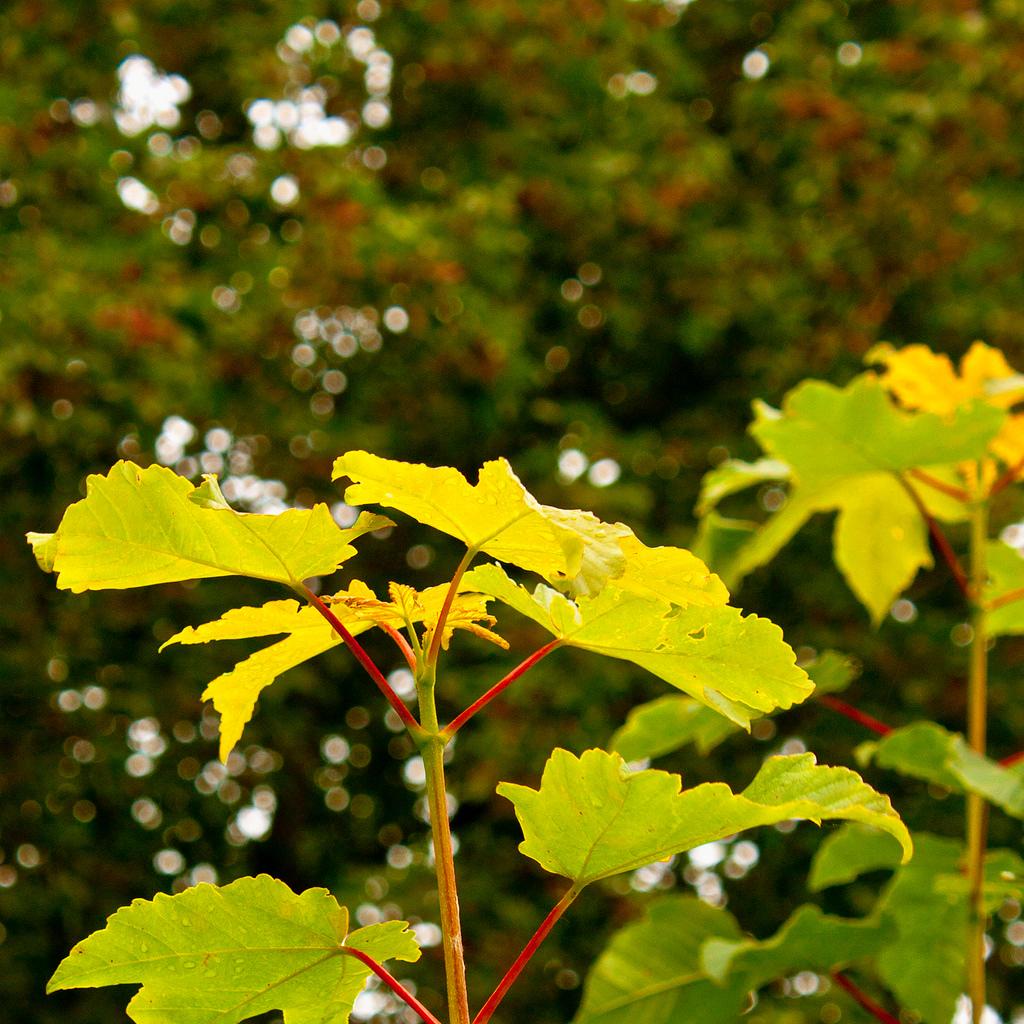 Plant flower Nature Landscape macro closeup photo color