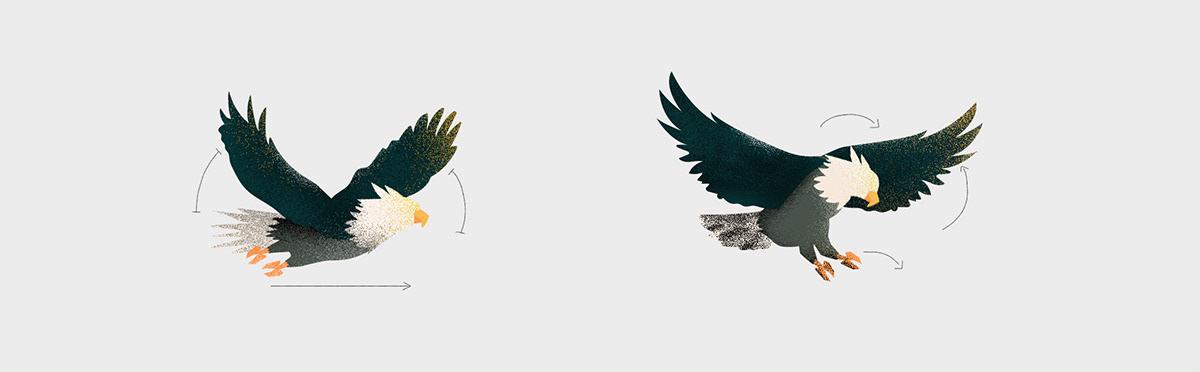 Image may contain: bird, animal and bird of prey