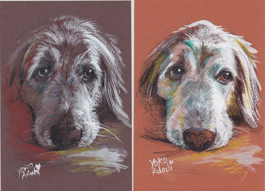 ILLUSTRATION  dogillustration GOLDENRETRIEVER Retriever dog art イラスト ドッグイラスト photoshop sketch Drawing