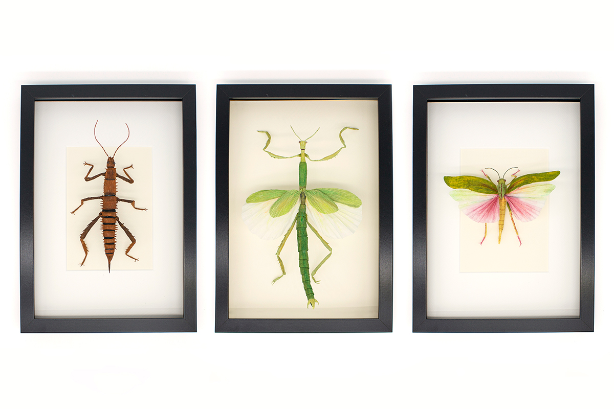 crepe paper entomology Insects paper paper art paper engineering paper sculptures papercraft vegan taxidermy Thorny Devil