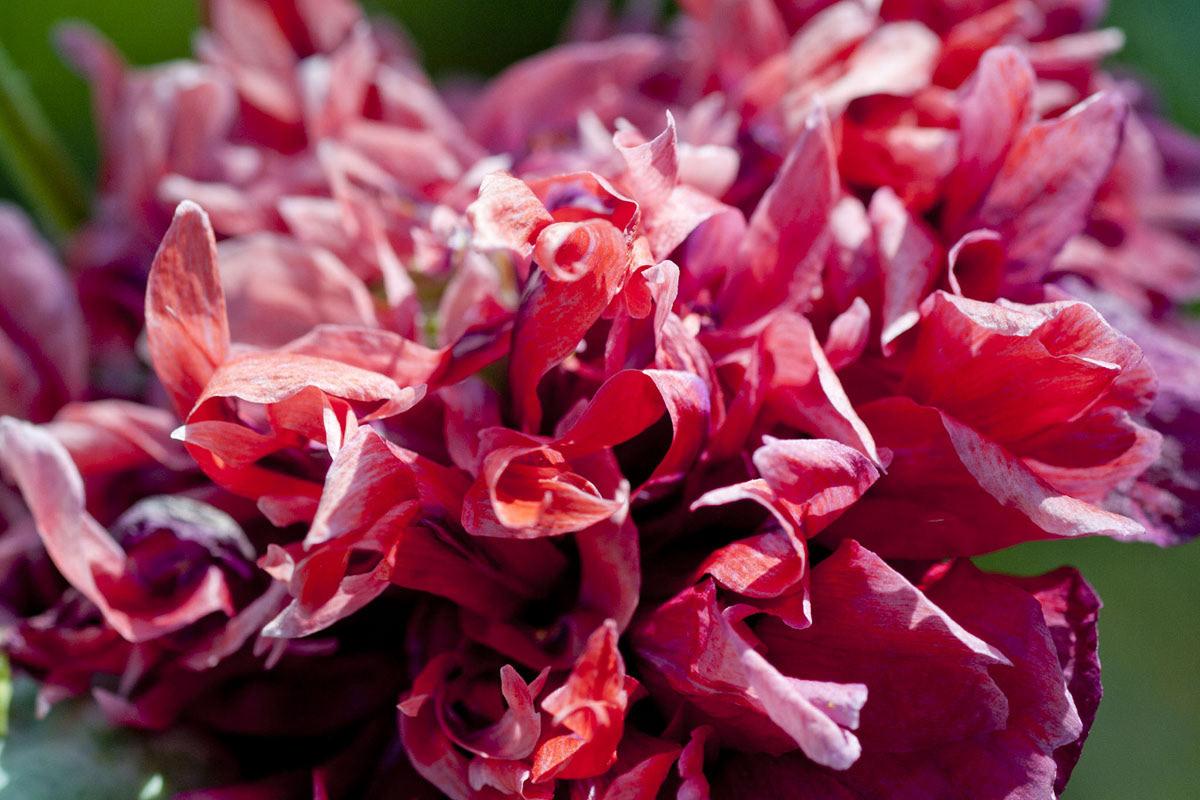 Photography  garden macro Canon Flowers Patterns inspiration