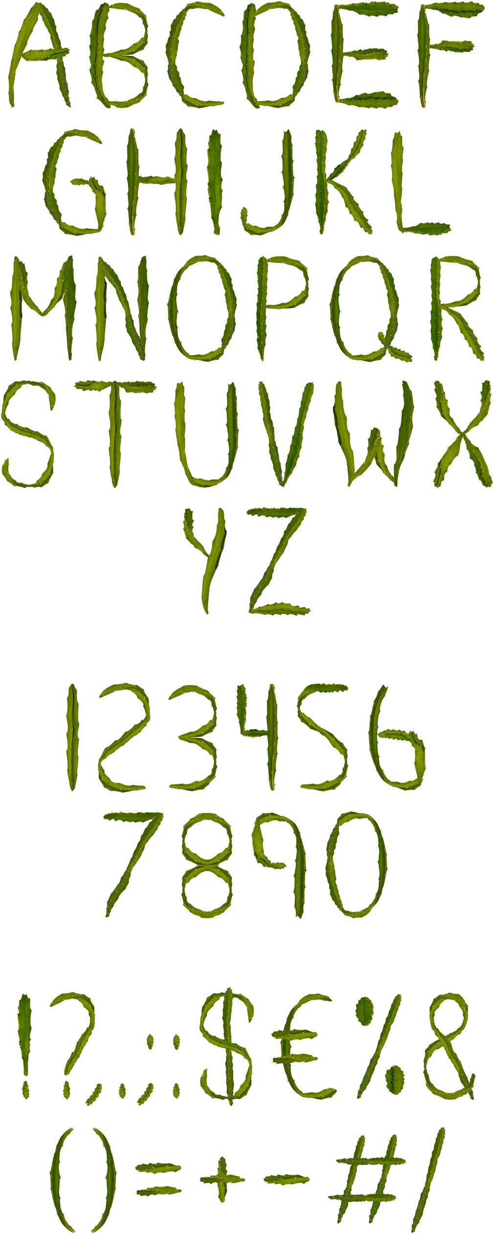 font typography   handmade lettering alphabet cactus grown Plant