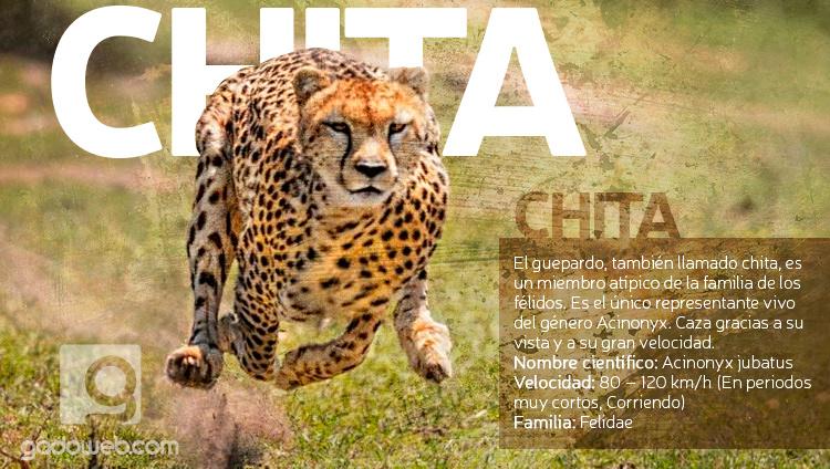 Chita, photoshop, fotomontaje