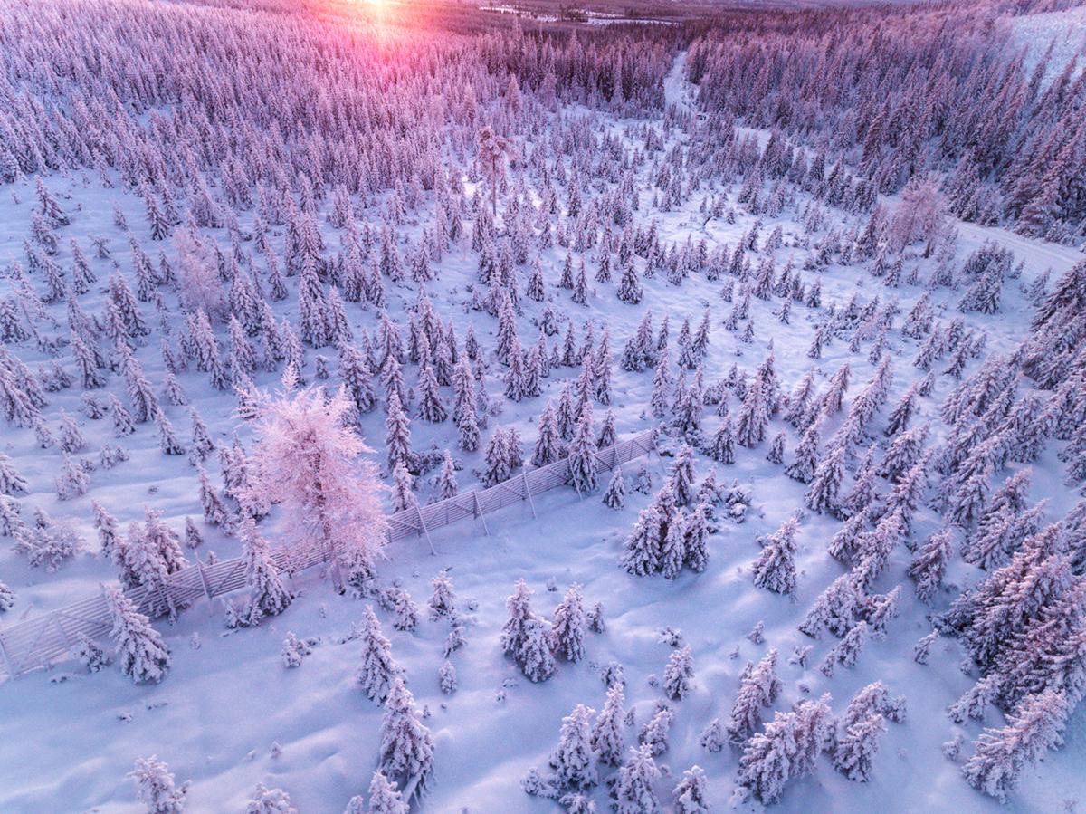 Aerial drone Lapland finland winter Landscape forest