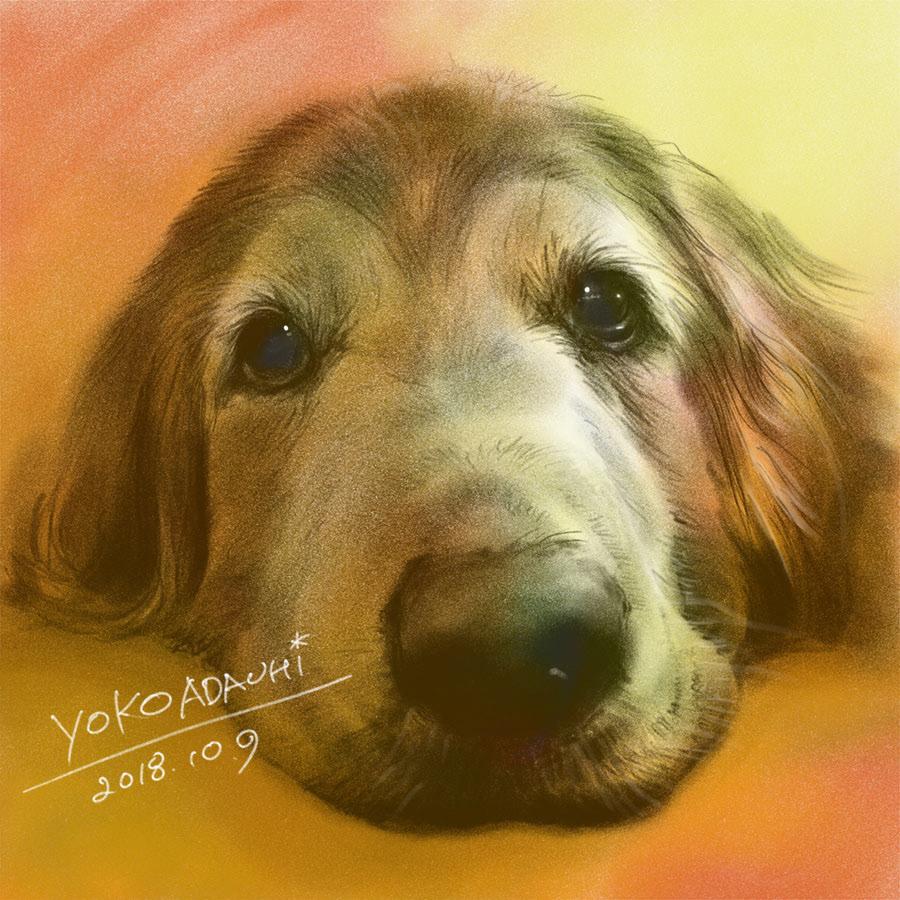 ILLUSTRATION  dogillustration GOLDENRETRIEVER Retriever dog doglover zephyr art イラスト Drawing