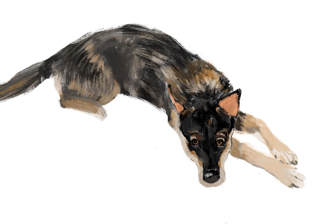 animal portrait book cover digital painting dog dog illustration poster 犬の絵
