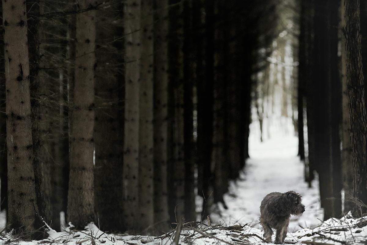 dog Landscape Nature forest Tree  animal color jörg marx