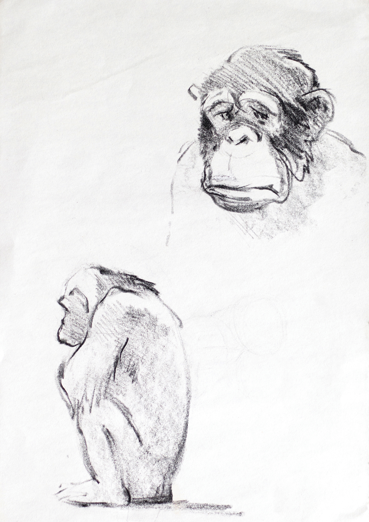 3D,zoo,gorilla,typo,safari,Typeface