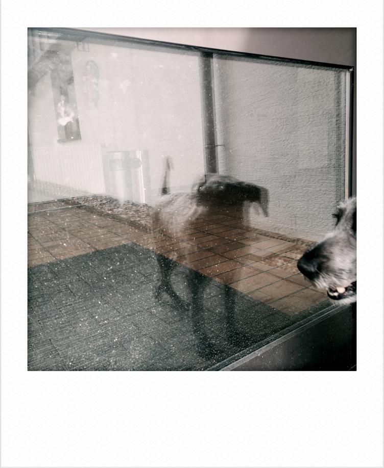 Image may contain: animal, dog and carnivore