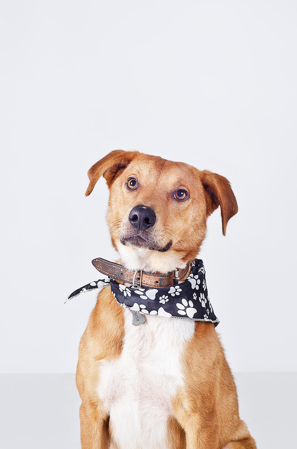 dogs  rescued dogs adoption portrait  dog portrait