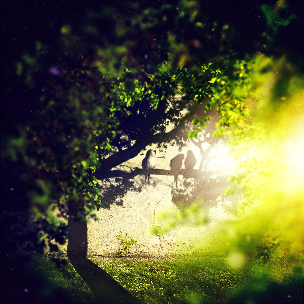 surreal retouching  light shadow concept photomanipulation Tree  parrot bird memories