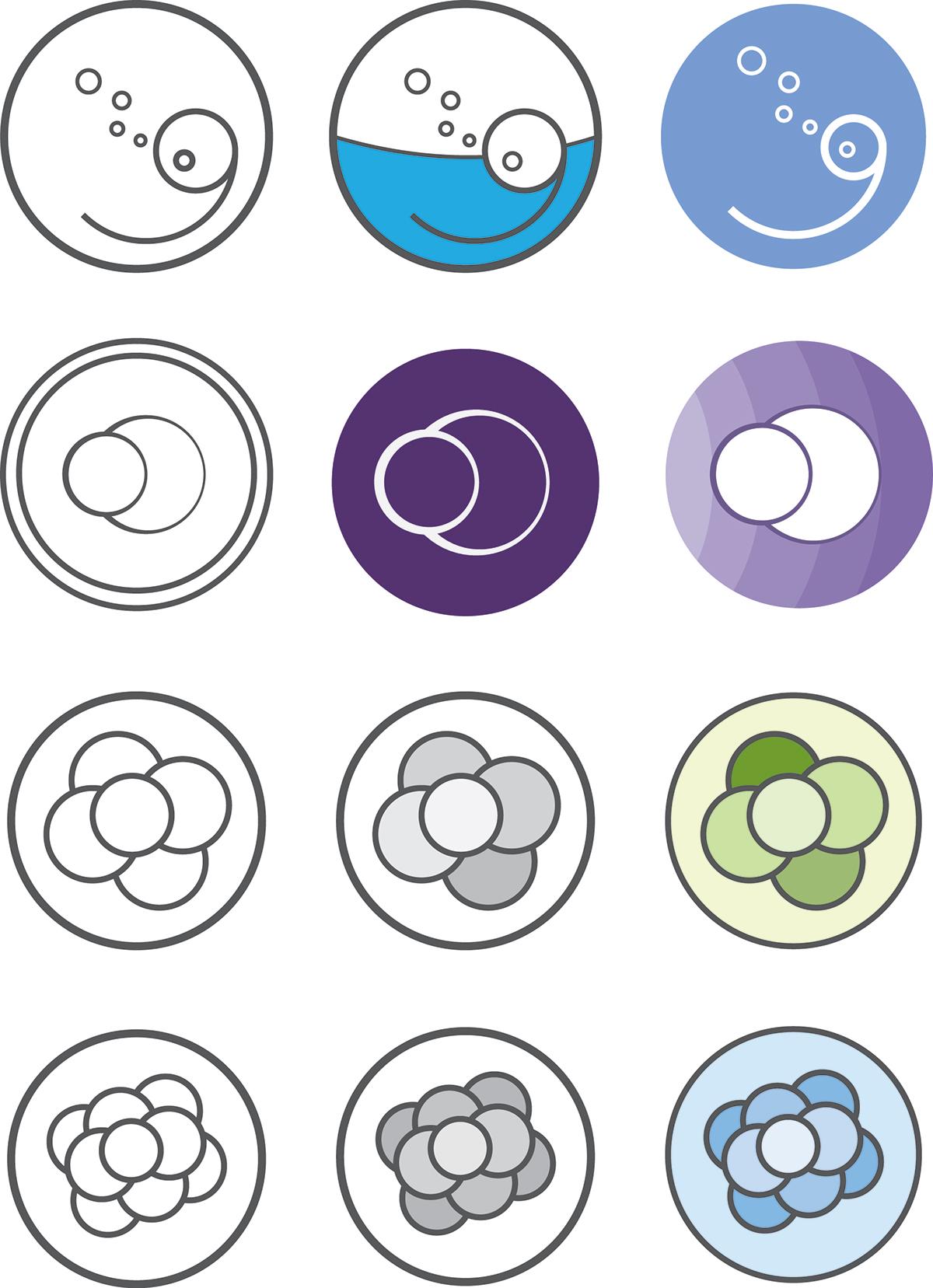 Web Design  graphic design  wordpress material design user experience