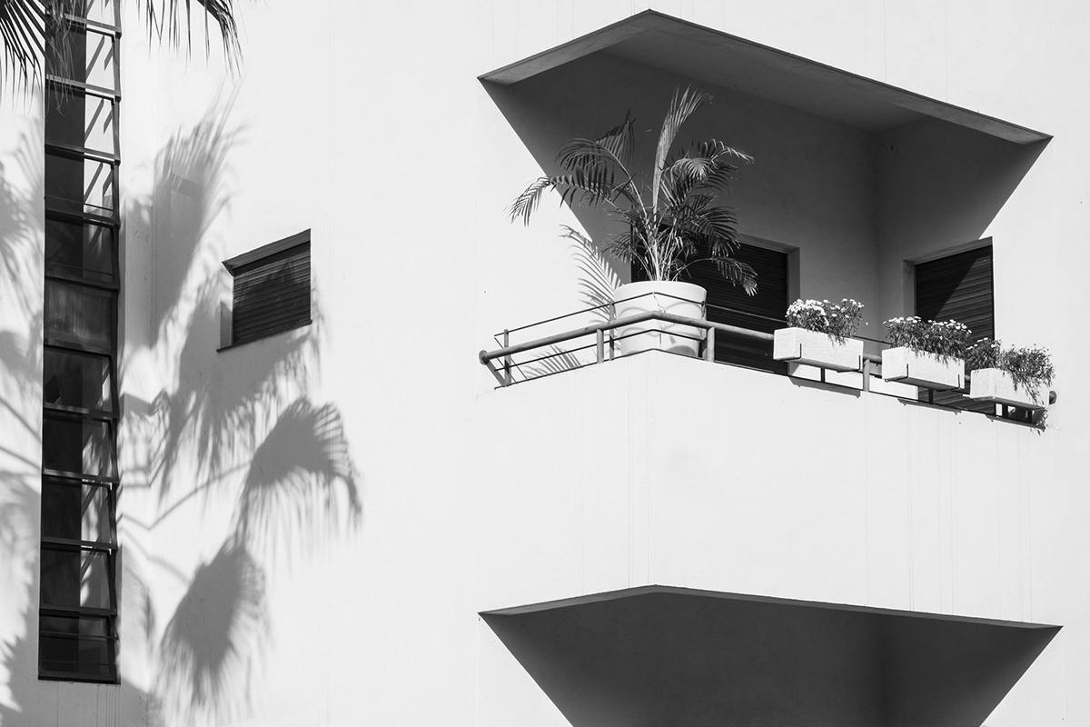 Image may contain: palm tree, black and white and house