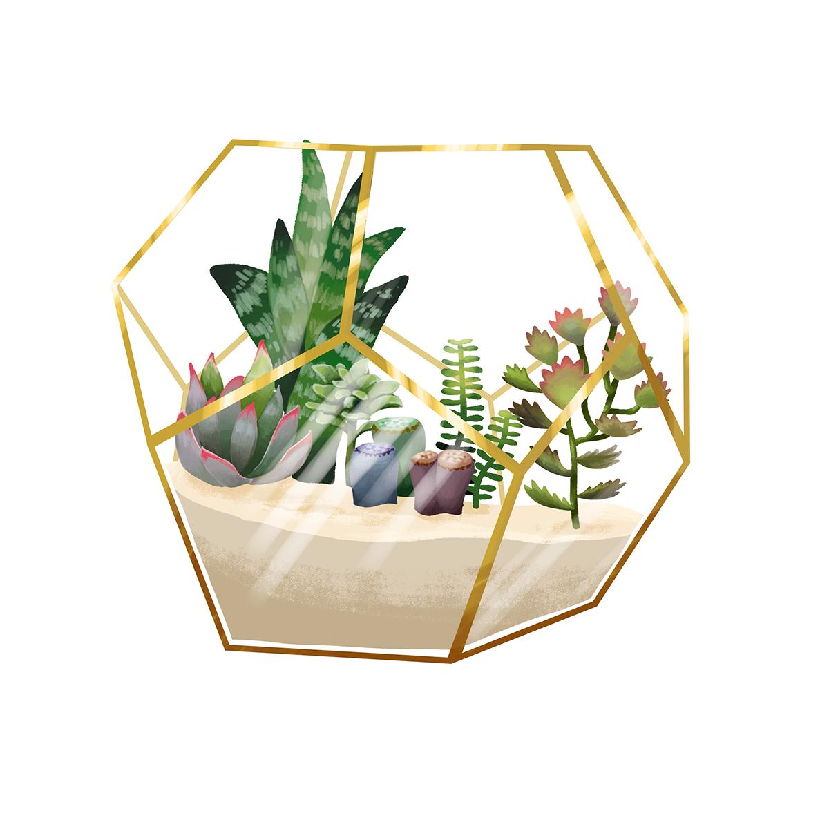 Terrarium With Succulents On Behance