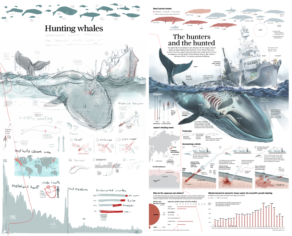 the importance of the issue of whale hunting