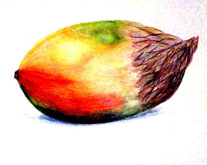 Fruit meets animal art opdracht