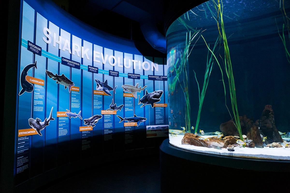 Image may contain: aquarium and reef