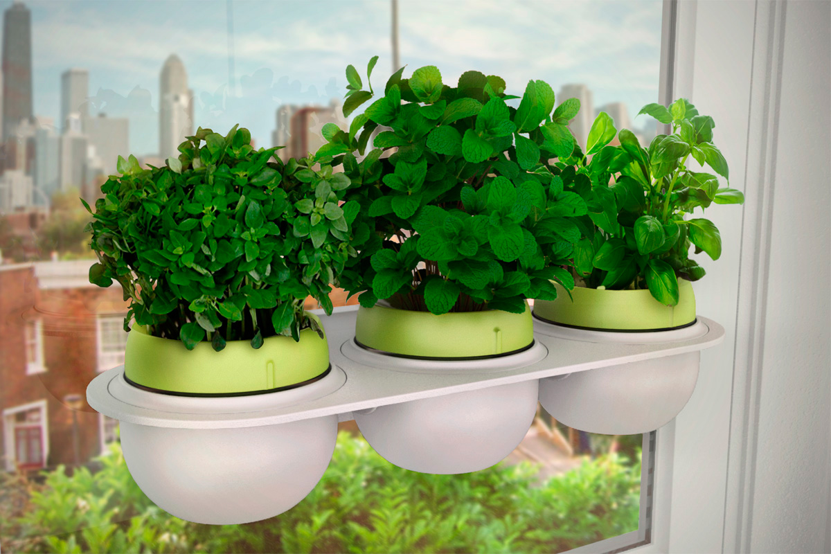 hydroponic Droponic harvest Plant mint Basil agriculture crowdfunding