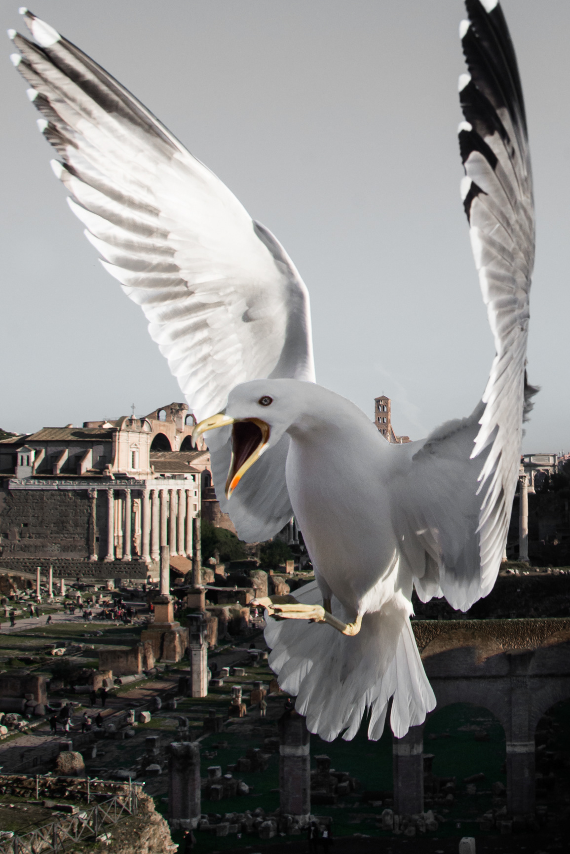 Rome birds Travel Italy streetphotography Documentary  streets