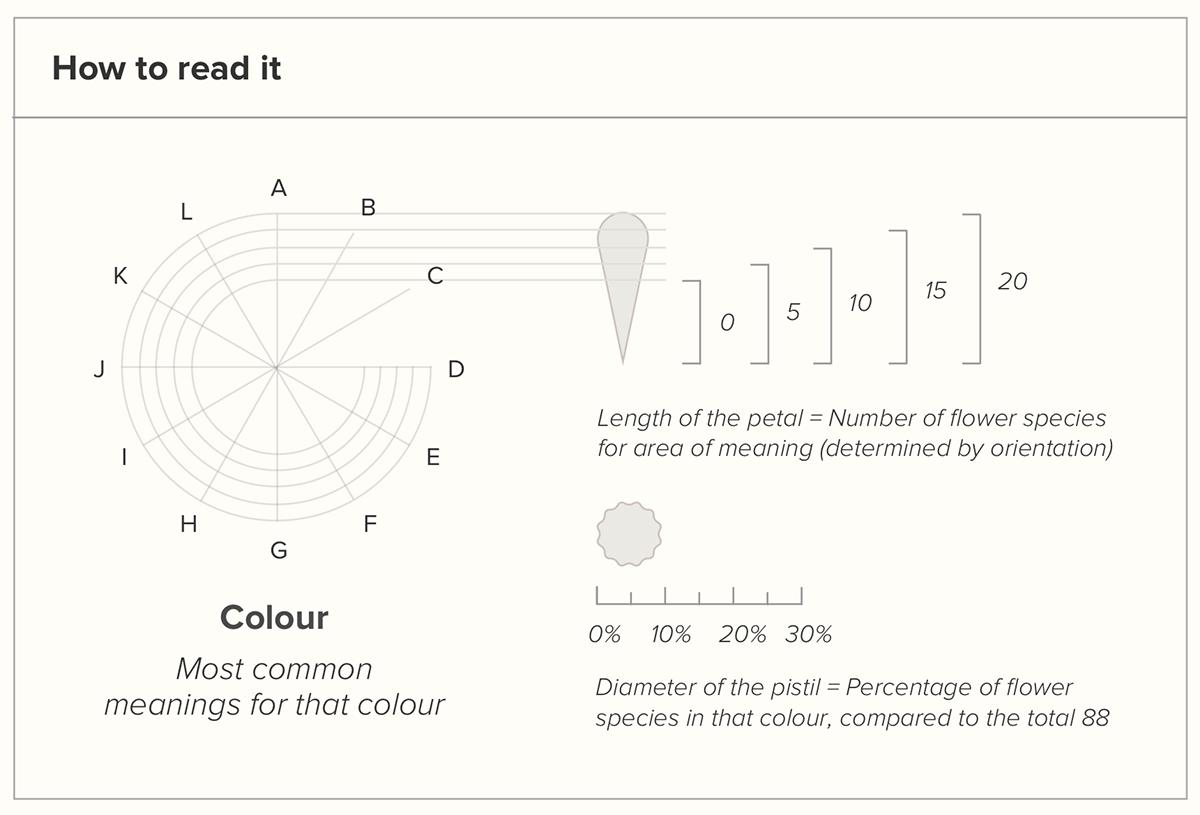 chart data visualisation Flowers infographic information design language of flowers meaning of flowers radar chart sankey sankey diagram