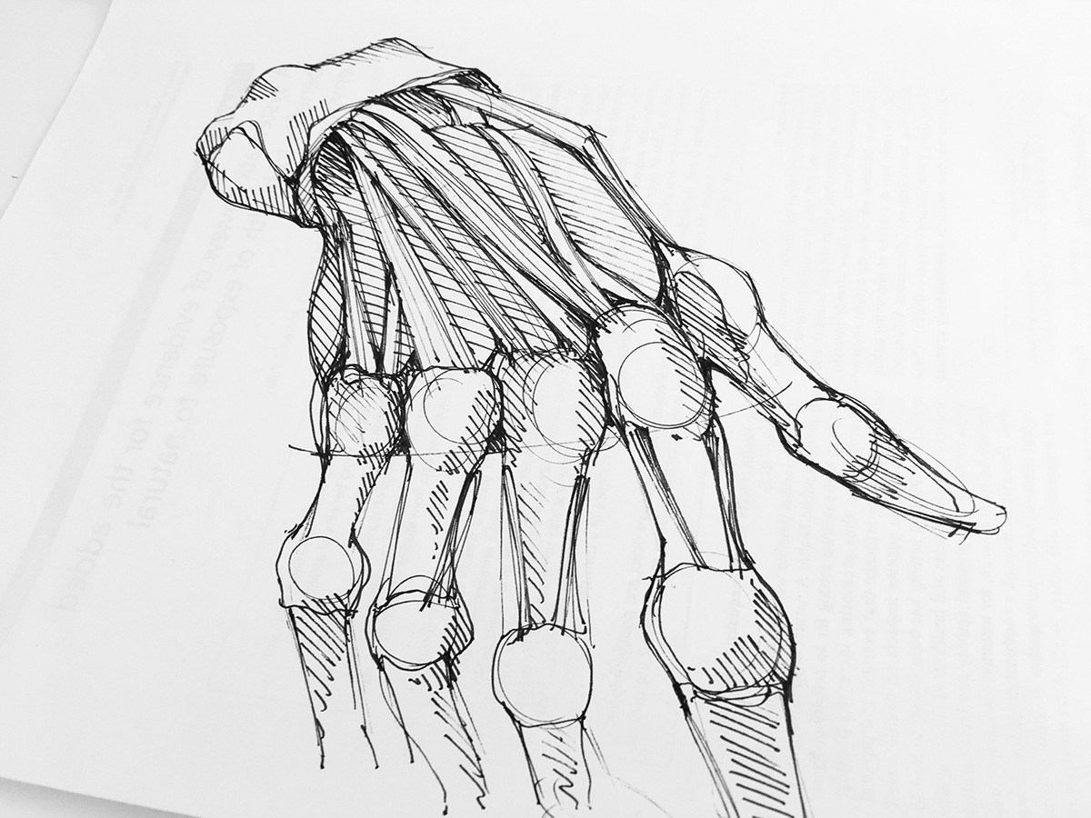 Human Anatomy Sketches On Wacom Gallery