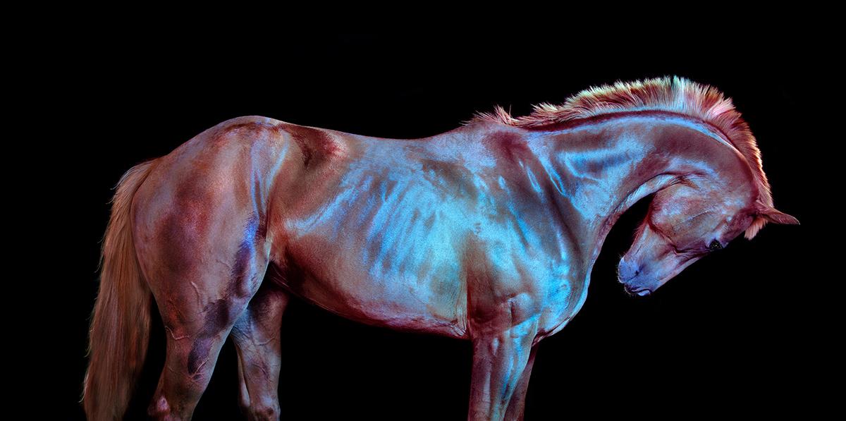 Andrew McGibbon art Exhibition  horses photo Photography  wild horses
