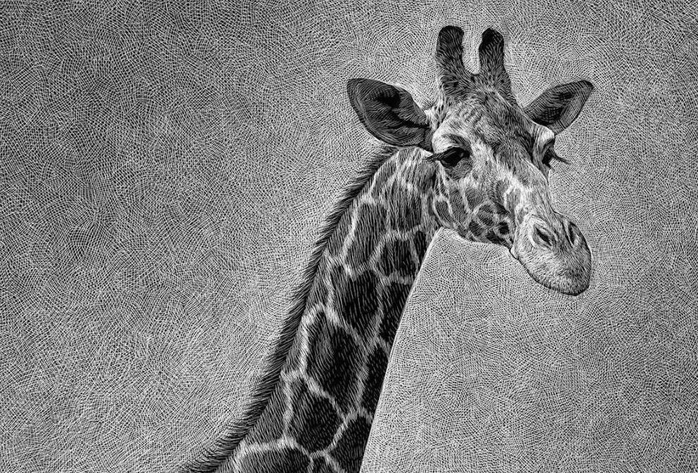 scratchboard animals giraffe lion elephant gorilla