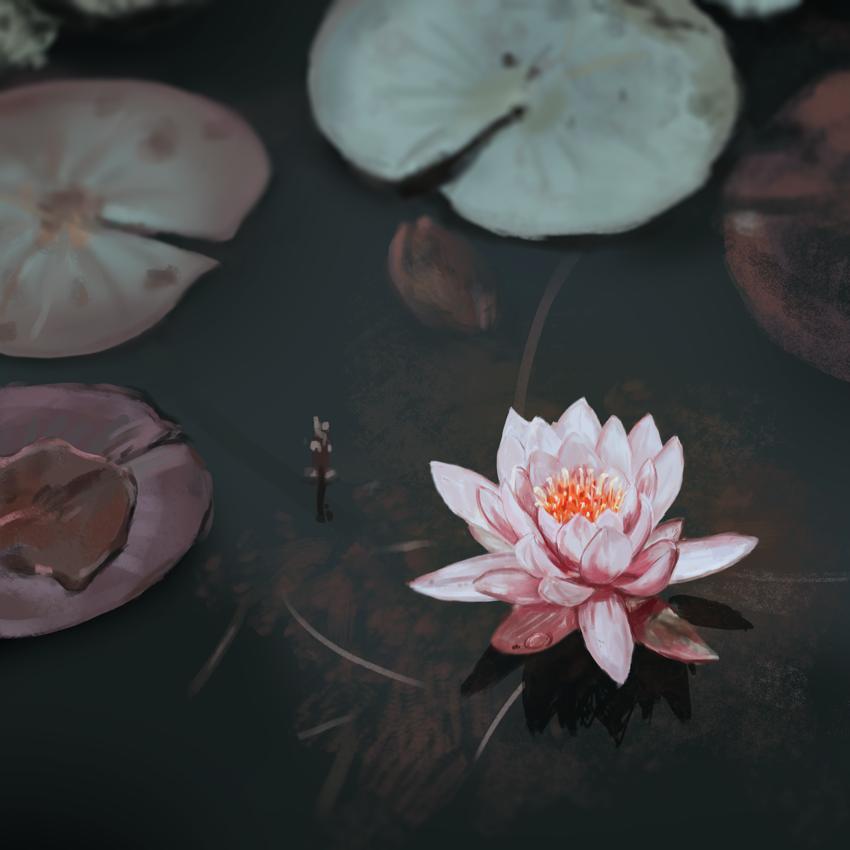 Lotus Flower Illustration On Behance