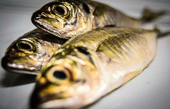 Pesca fishing peixes fish